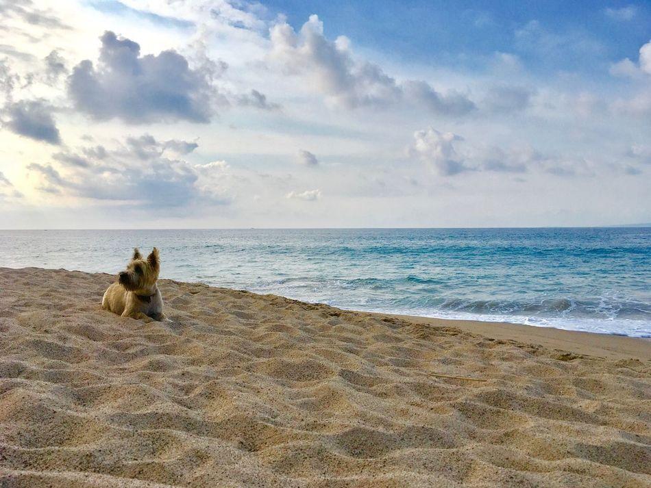 Beautiful stock photos of peaceful,  Animal Themes,  Beach,  Beauty In Nature,  Cloud - Sky