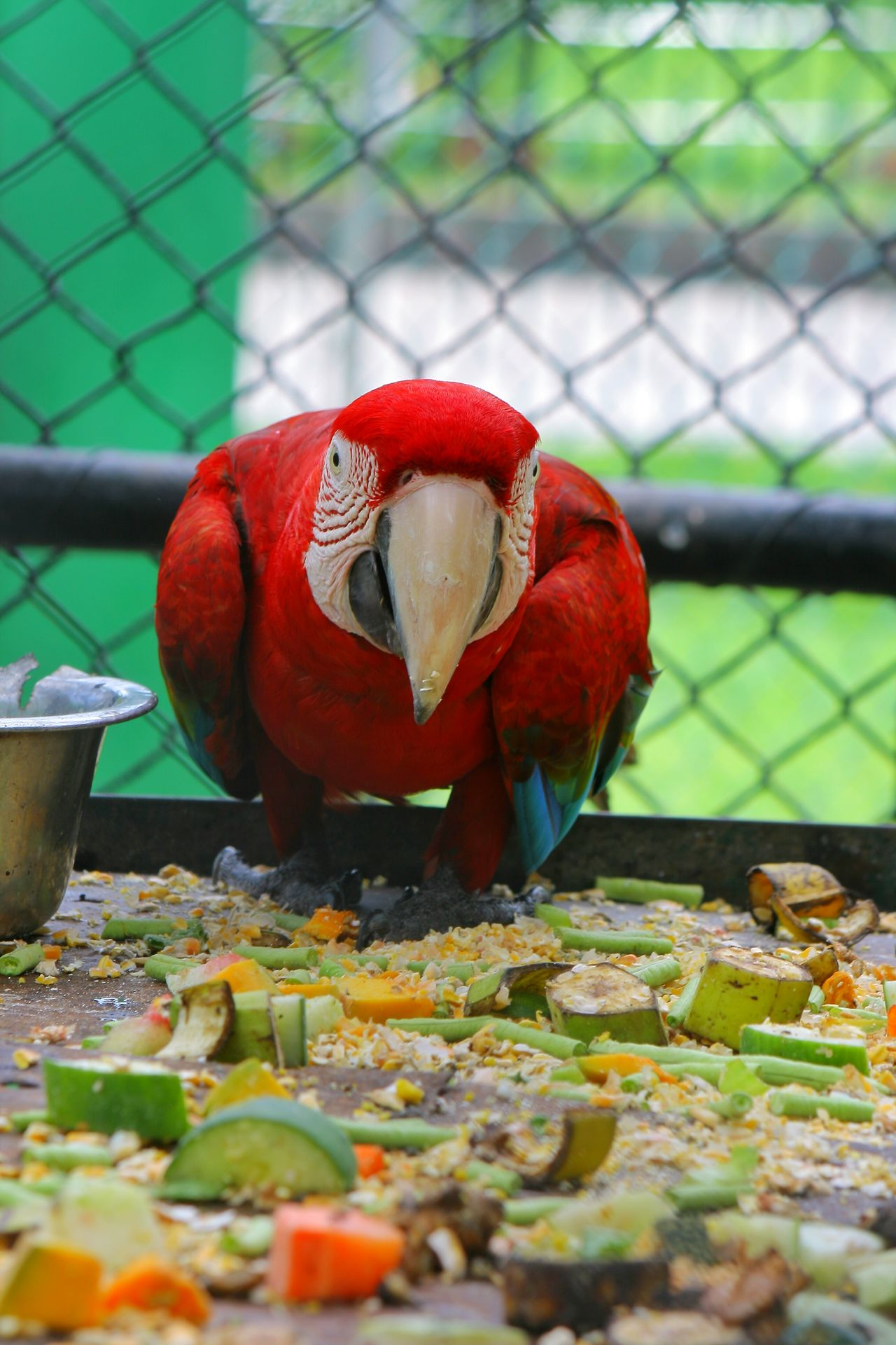 Trinidad And Tobago Relaxing Taking Photos Macau Emperorvalleyzoo Zoo Photography  Zoophotography Birds🐦⛅ Bird Photography Bird Posing Bird Portrait