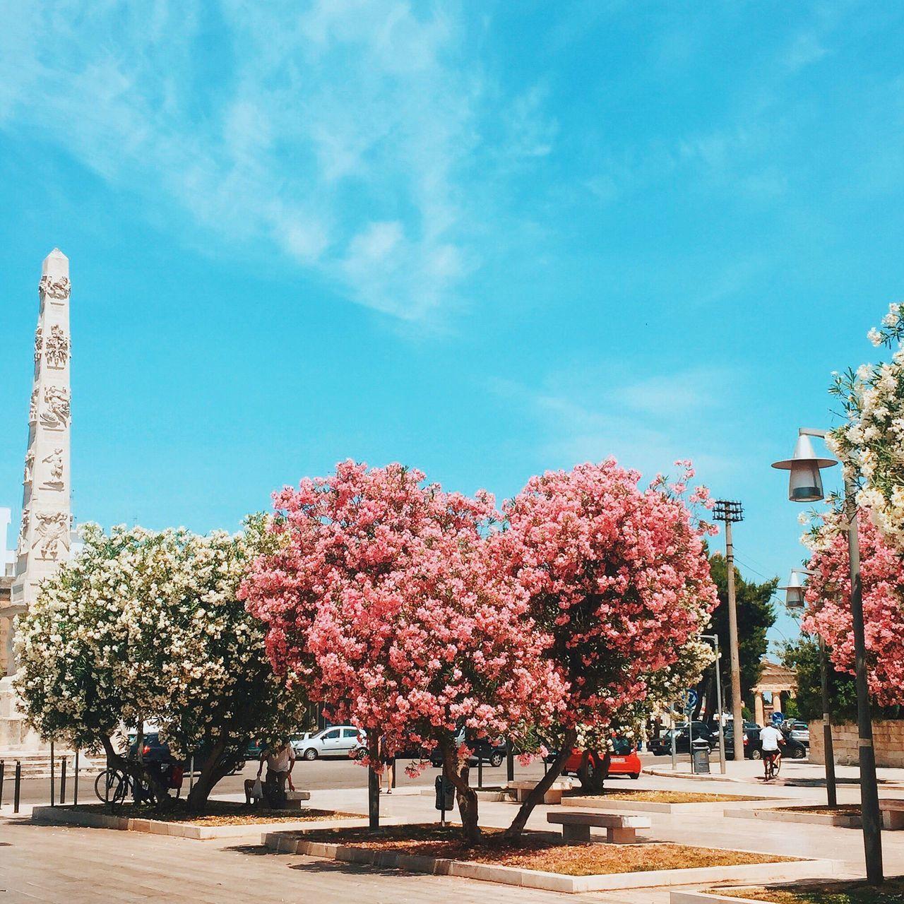 VSCO VSCO Cam EyeEm Nature Lover Streetphotography IPhone IPhoneography Eye4photography  The Street Photographer - 2015 EyeEm Awards Italy RePicture Growth Pastel Power Urban Spring Fever