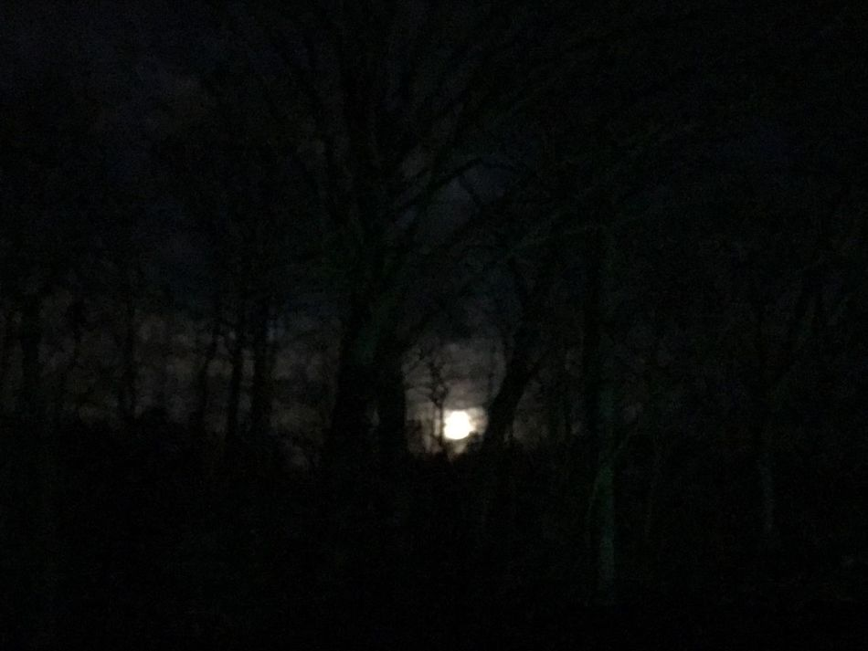 Moonlight Moon And Clouds Moon And Trees Night Photography Night Moon Bright Moon Moon Shots Moon Light Bright Night Beautiful Night Beauty Of The Night Beautiful Moon Lit Clouds
