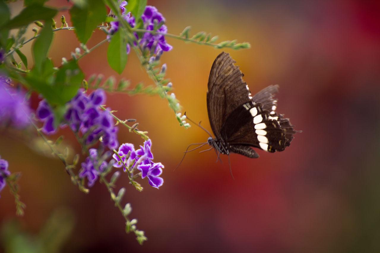 Butterfly Color Palette Flower Fly Follow Sweet