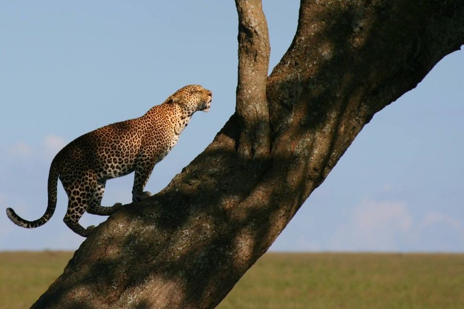 Nature Landscape Wildlife & Nature Wildlife Africa Tanzania Serengeti National Park EyeEmNewHere