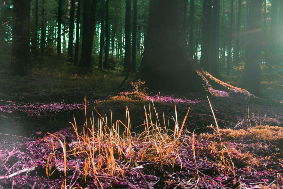 Forest Colours Forest Trees Early Morning Summer Morning Check This Out Taking Photos Hanging Out Enjoying Life