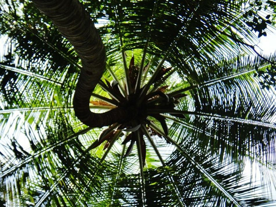 Low Angle View Palm Tree Full Frame Backgrounds Green Color Nature Outdoors No People Sky Growth