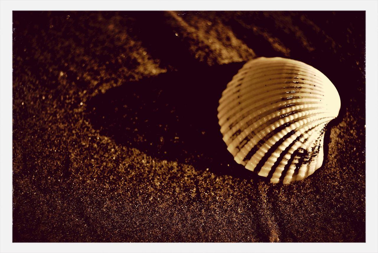 Seashell on beach at sunset