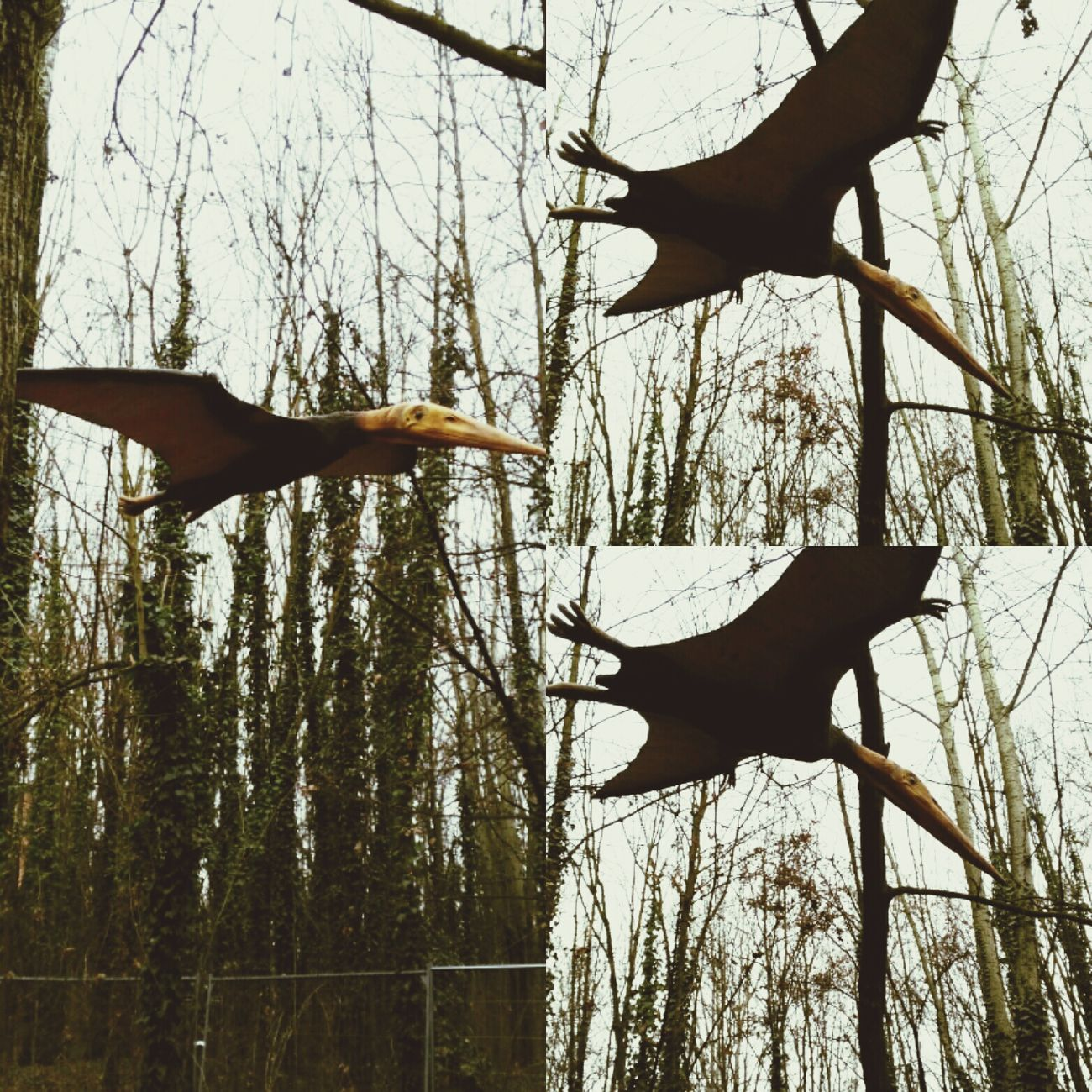 Dinosaur Animal Pterodactyl Modena Flying