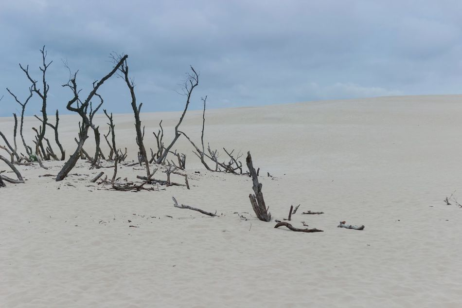 Sand Nature Scenics Tranquility Sky Dried Plant Cloud - Sky No People Minimalism National Park Słowiński Park Narodowy Nature Non-urban Scene Outdoors