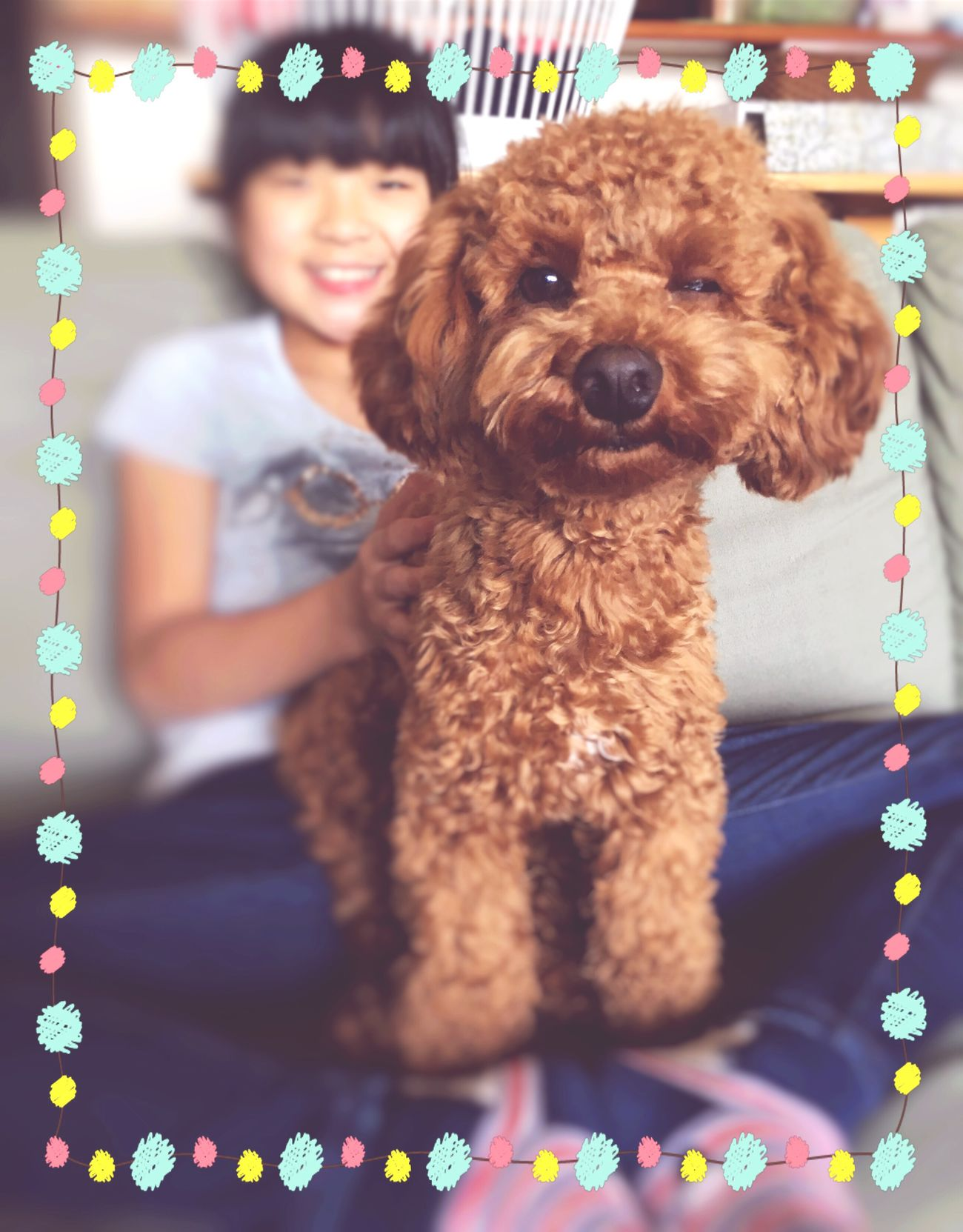 Wink Dog Pets Poodle Toypoodle Smile 😚 One Animal Looking At Camera Smiling チロル Miracle Miracleshot なんか笑ってるような口元❣️