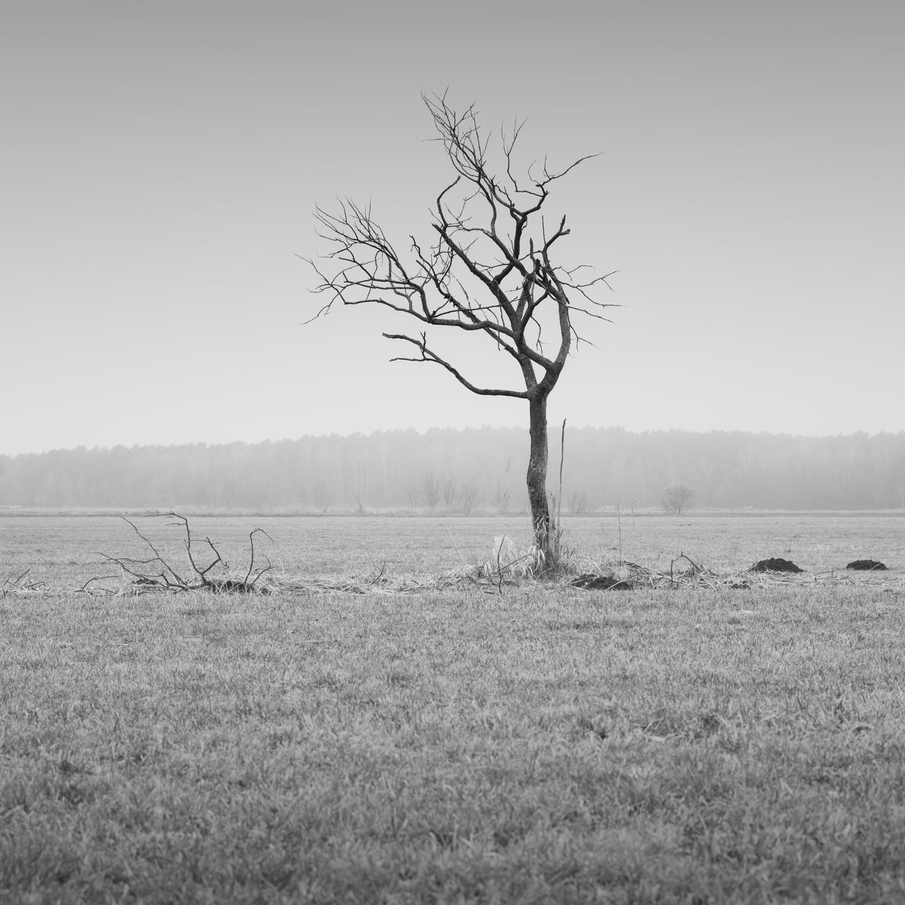 skeleton tree on a barren field in brandenburg germany Agriculture Bare Tree Barren Tree Beauty In Nature Black And White Branch Brandenburg Clear Sky Day Germany Havelland Landscape Landscape_photography Lone Lone Tree Monochrome Nature No People Outdoors Philipp Dase Sky Tranquil Scene Tranquility Tree Winter Landscape
