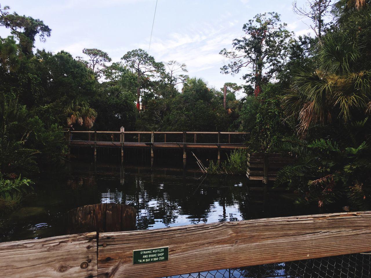 The gator habitat at the zoo Zoo Animals Florida Gators Alligator Crocodile