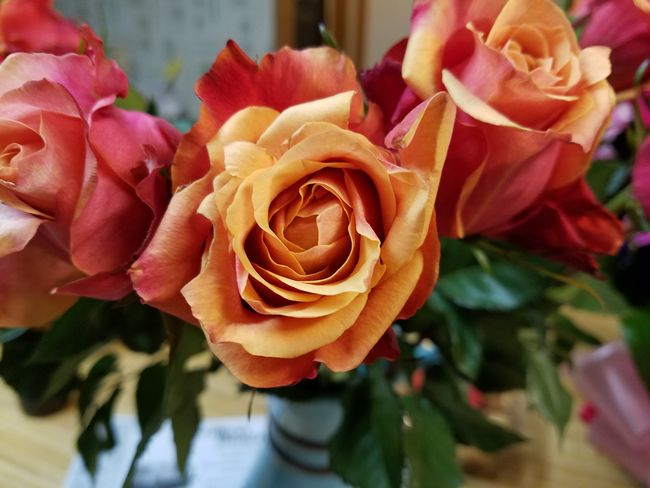 Tawny Roses Ujustgotkaied Petals Flowers Roses