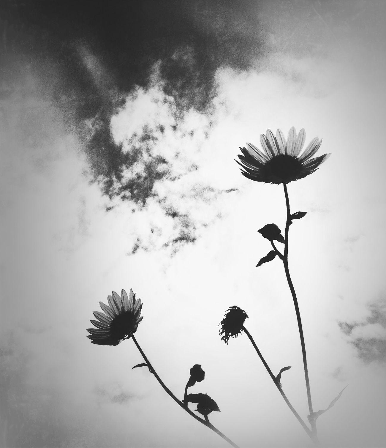 Flowerporn NEM Still Life Bw_collection AMPt - Still Life (Nature Morte)