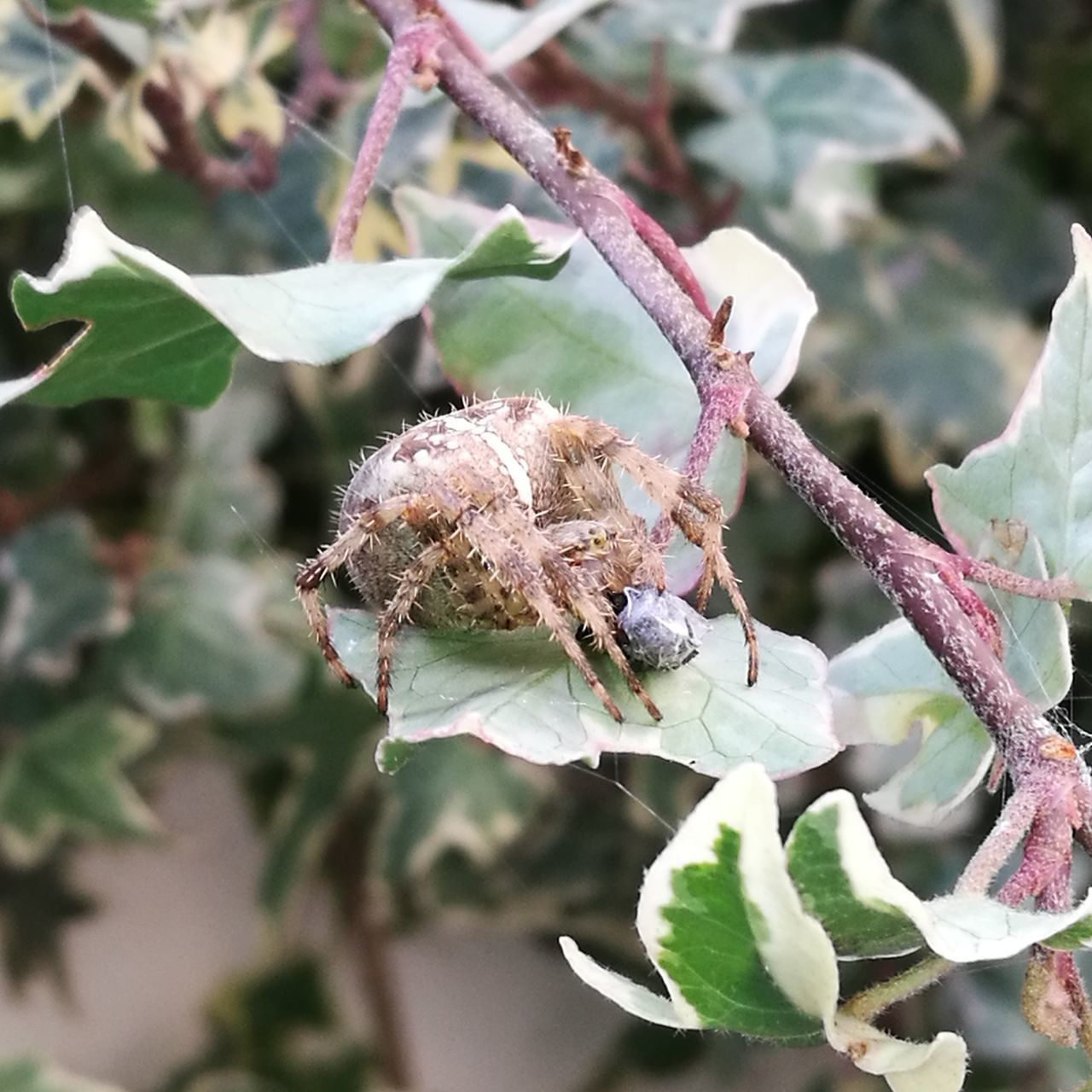 one animal, animals in the wild, animal themes, leaf, insect, day, nature, no people, plant, close-up, outdoors, animal wildlife, focus on foreground, fragility, beauty in nature, tree