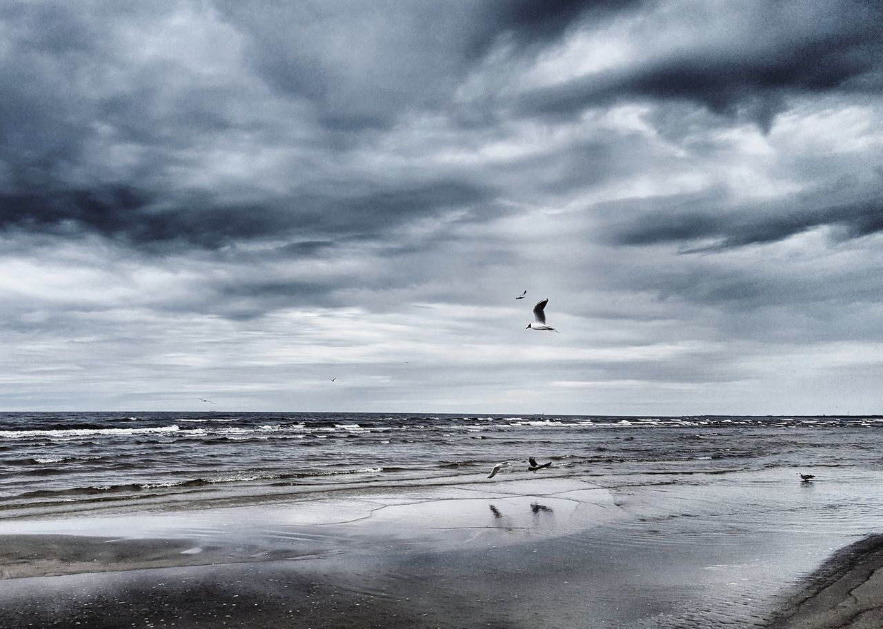 Silence Live For The Story Sea Beach Bird Flying Horizon Over Water Water Cloud - Sky Nature Sky Beauty In Nature Outdoors Seashore Photography Silence Moment Structure Jurmala The Great Outdoors - 2017 EyeEm Awards The Week On EyeEm Lost In The Landscape