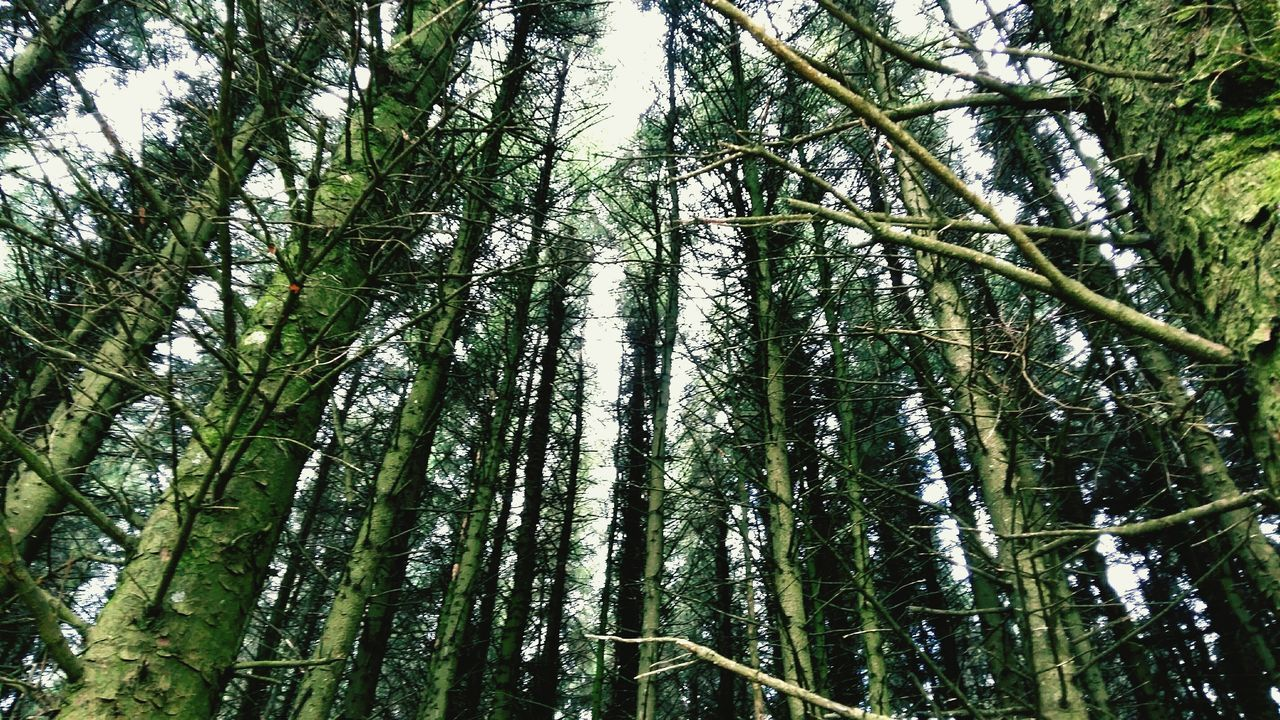 nature, growth, forest, tree, low angle view, beauty in nature, tranquility, day, bamboo - plant, bamboo grove, outdoors, no people, tranquil scene, green color, tree trunk, full frame, scenics