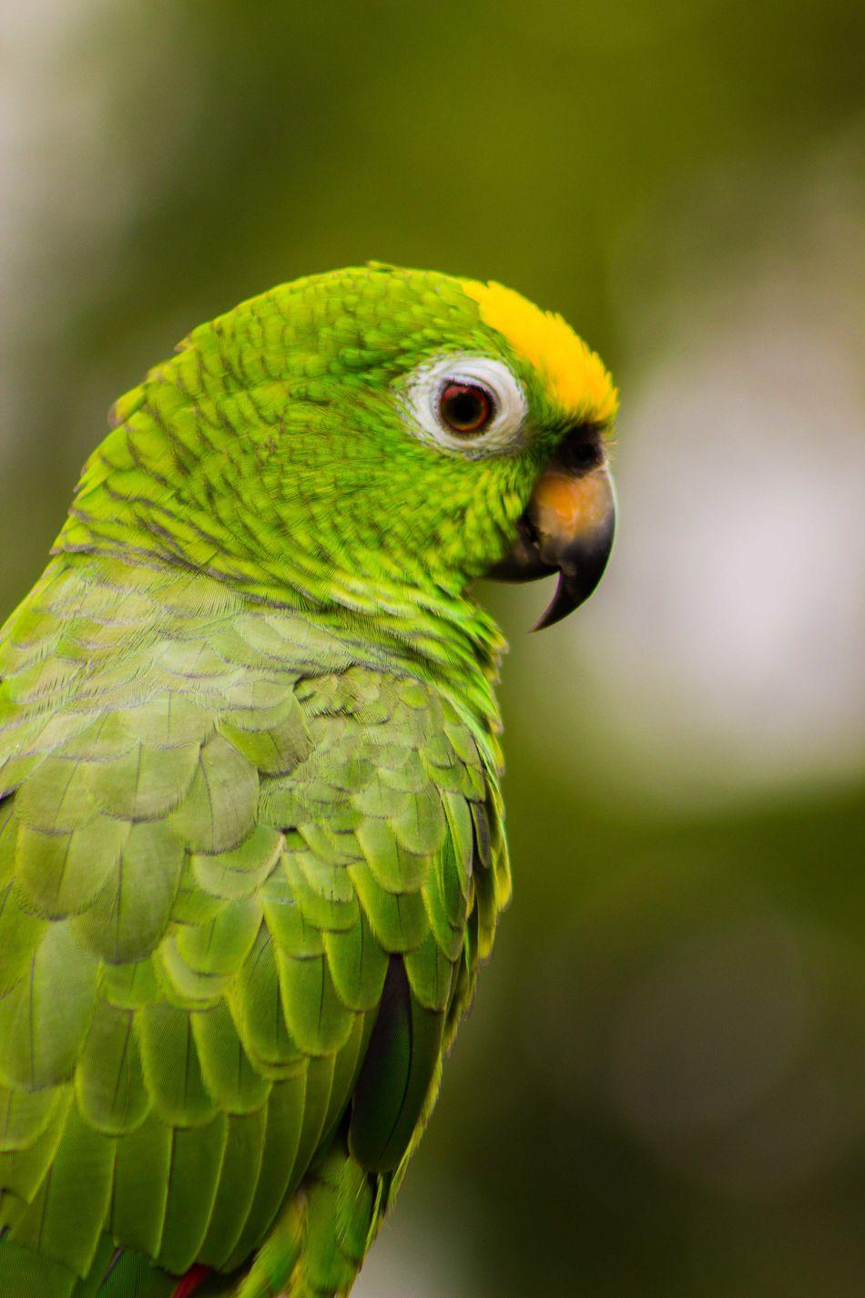 #bird #birds #Nature  Animal Themes Animal Wildlife Close-up Green Color One Animal Parrot First Eyeem Photo