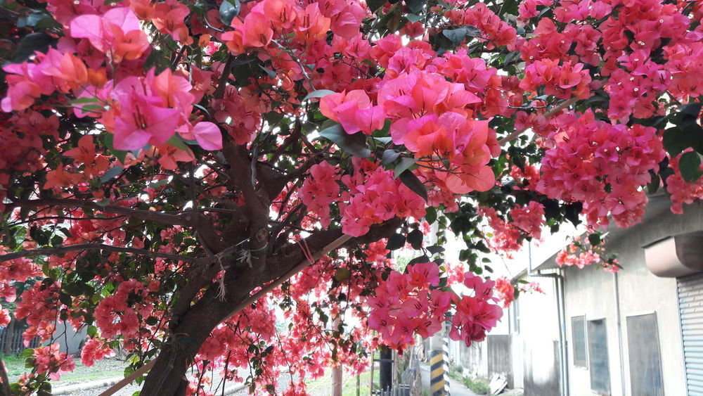 Urban Spring Fever Taiwan Beside The Road Fences Breeze Flourishing Vibrantvibes Nofilter Photography