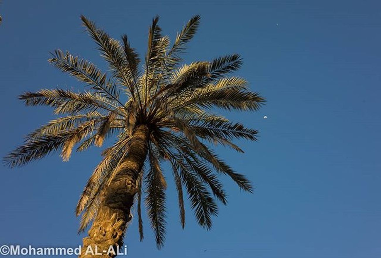 Ricoh Gr Ricohgr Palms Basrah Iraq Color Colour Sky Shattalarab Earthday