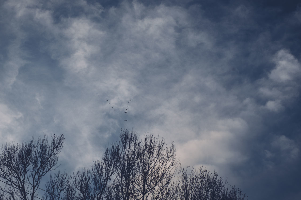 Clouds Dramatic Sky Empty Space Evening Flying Geese Looking Up Negative Space Sky Trees