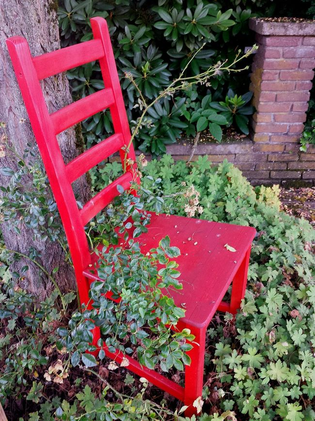 Red Chair Have A Seat Take A Seat Come And Sit With Me For A While... Still Life Stillleben Mit Rotem Stuhl Chair Art Mit Rosenpflanze Bewachsener Roter Stuhl Beautiful Scenery Bushes And Trees Red And Green Ladyphotographerofthemonth Showcase August Street Photography Relaxing