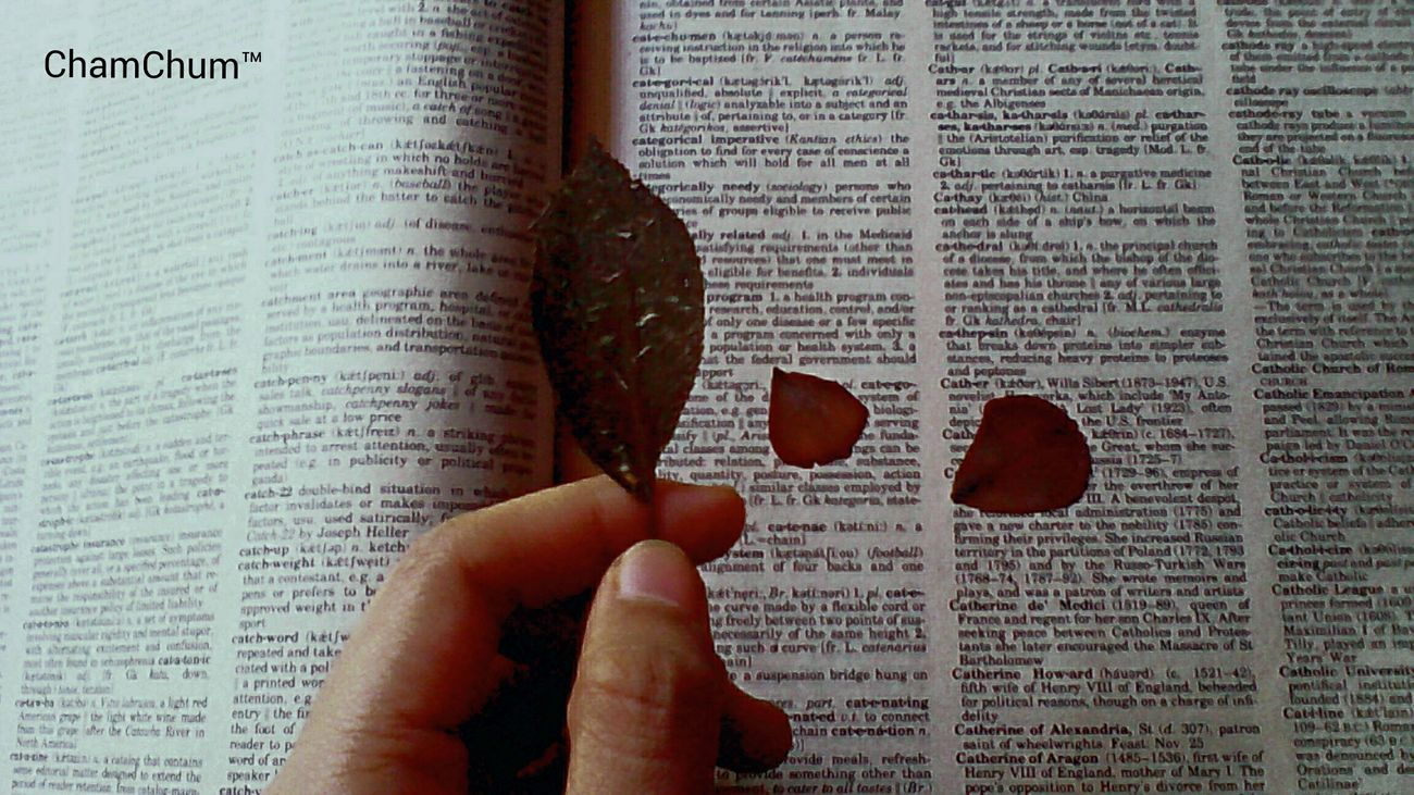 i love preserving leaves and flowers and even insects on books. its been months since i've locked them in. Dry Leaf Dead Petals Hello Eyeem. Sentimental Mood Memories ♥ Bie Diha Tanan Maytag Makadaog Kos Bagdok Bisag Way Pusta Pusta Haha :)