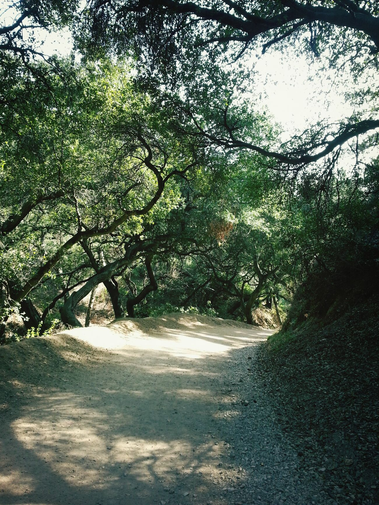 Let's take a hike. Claremont Claremontloop