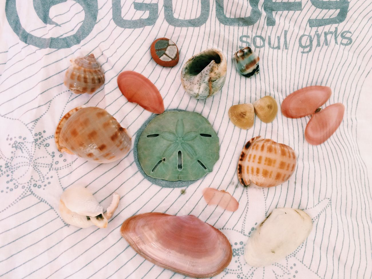 Nature's Diversities Seashells Seatreasure Mollusca Echinoidea Equinodermos Moluscos Bivalve Bolachadomar