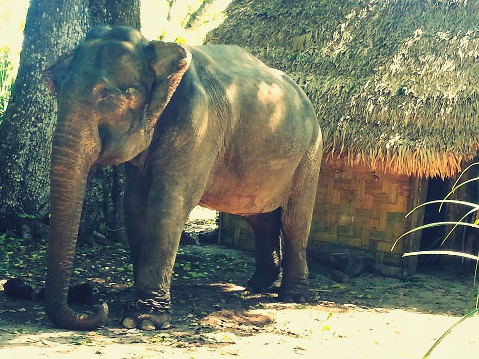 Enormous Basking In The Sun Elephant Close To Nature Amazing Experience Wildlife Photography Wildlife Collection Animal_collection EyeEm Nature Lover