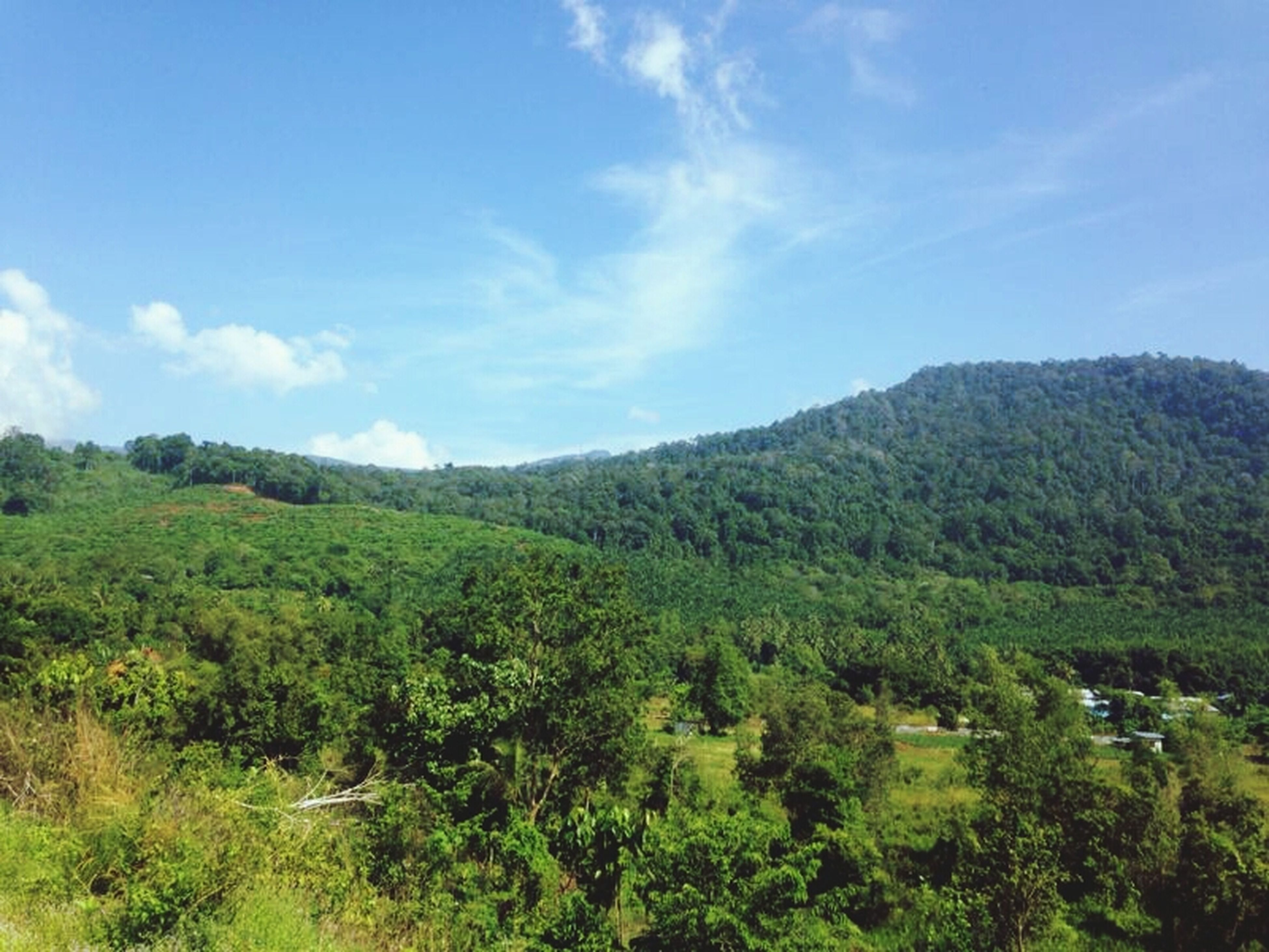 mountain, tranquil scene, tree, tranquility, sky, scenics, beauty in nature, green color, landscape, nature, growth, lush foliage, mountain range, non-urban scene, blue, cloud, cloud - sky, idyllic, green, day