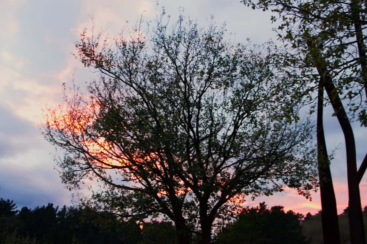 Sunset✨trees✨ Sunset Tree Silhouette Nature Landscape No People Beauty In Nature Outdoors