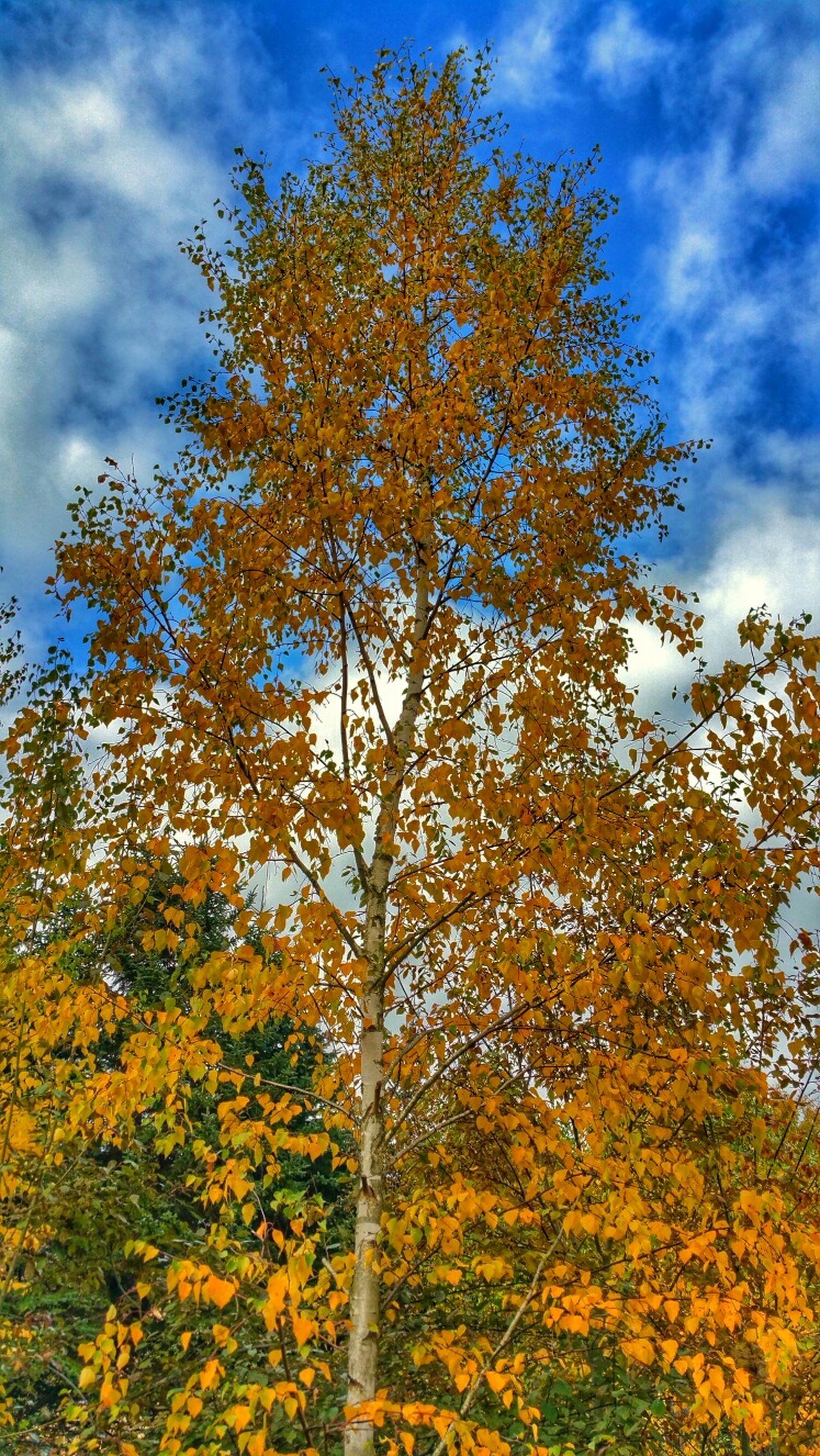 Herbststimmung Heikobo Herbst Herbststimmung Herbstfarben