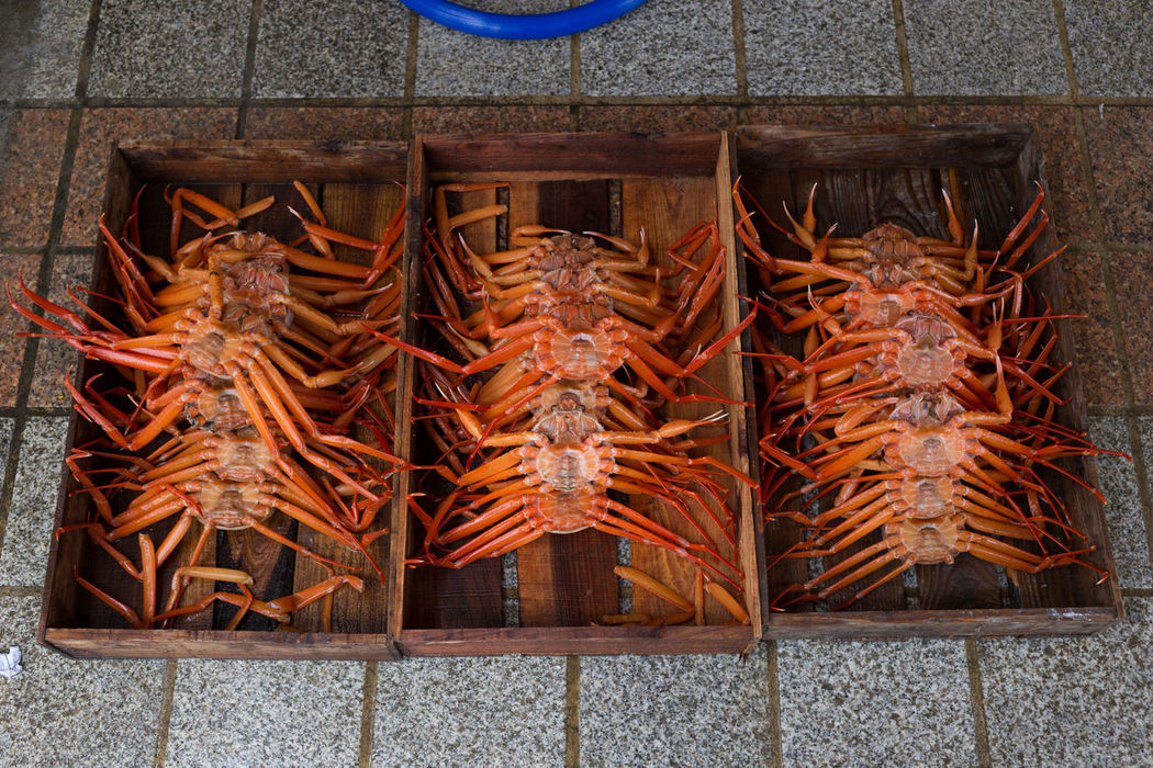Crab crated up for sale Bored Close-up Crab Crates Detail Food Food And Drink Foodie Korea Korean Food Market No People Orange Sea Seafood South Korea Still Life