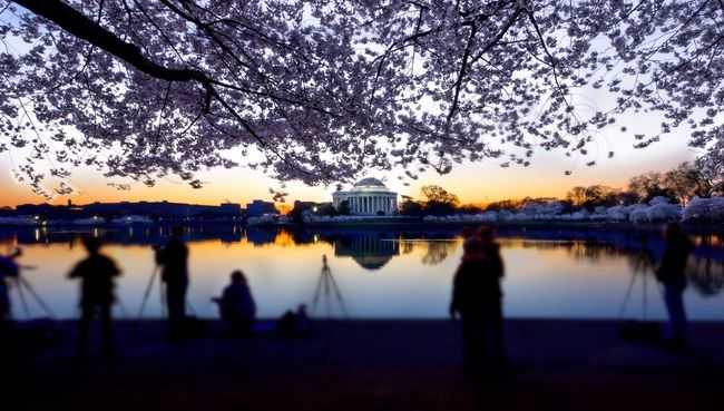 Tourists Sightseeing Cherry Blossoms Historical Sights