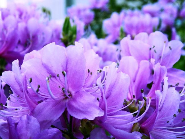 Flowers Nature 花