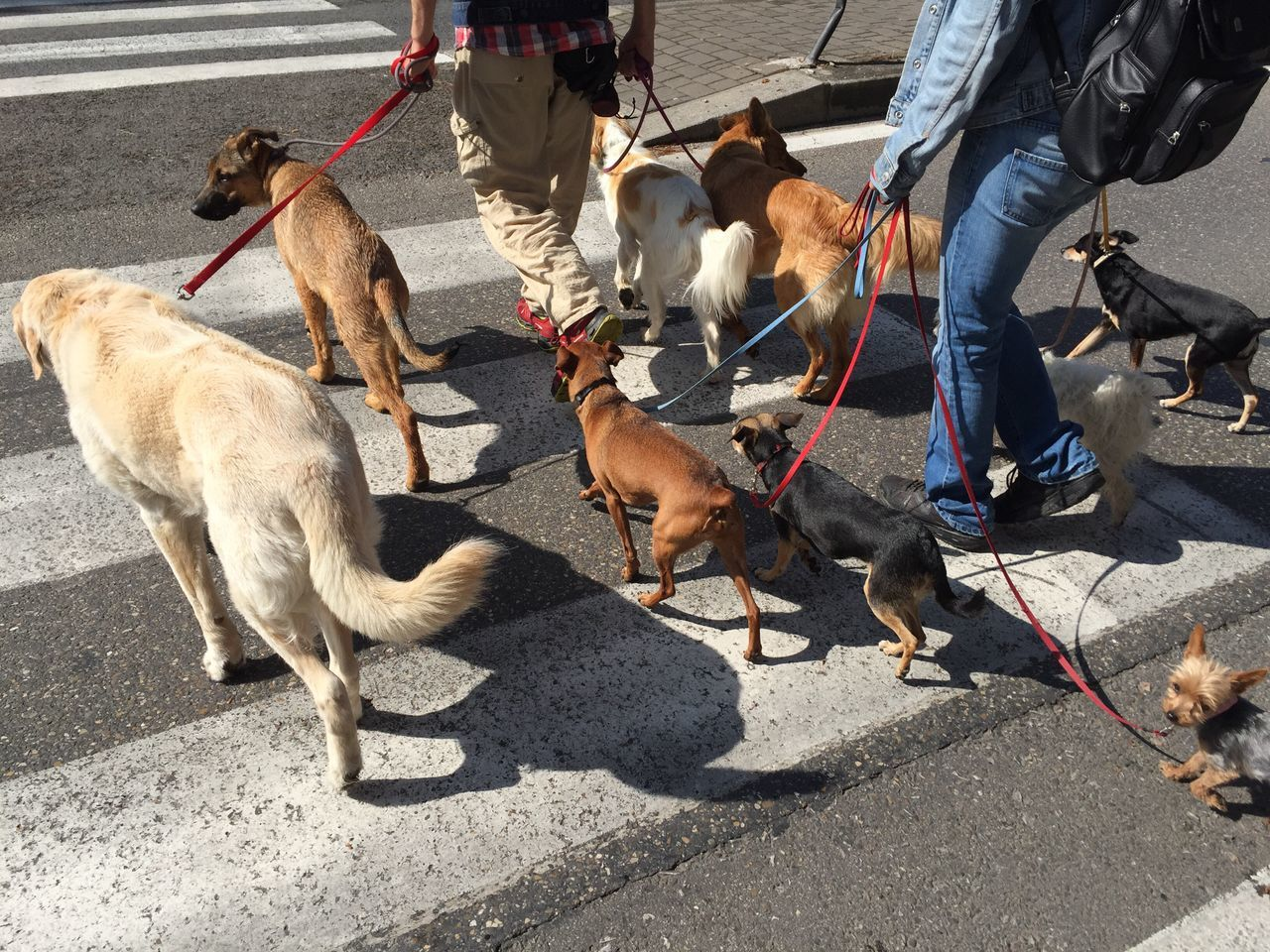 domestic animals, low section, real people, dog, outdoors, mammal, street, men, human leg, pets, day, togetherness, human body part, high angle view, shadow, road, sunlight, occupation, human hand, only men, adult, people