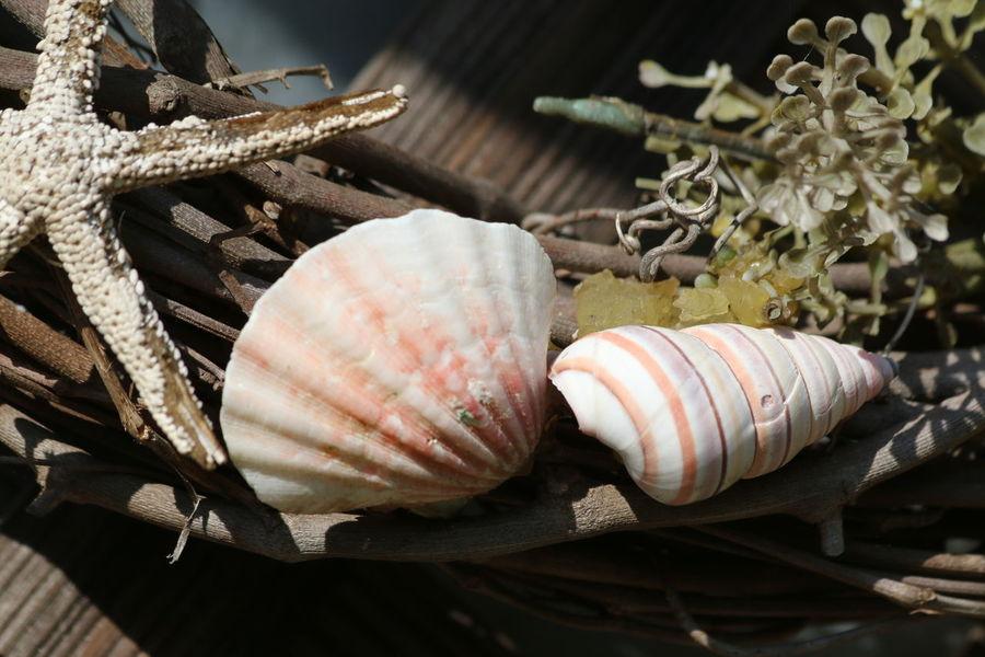 Seashells From The Seashore Starfish  Shells Close Up Seaside Living FloridaLifestyles Seashells From The Seashore No People Close-up Beach Day