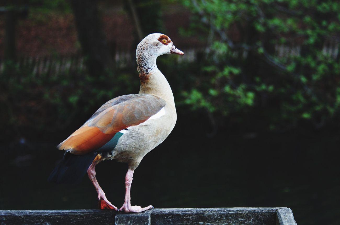 Forêt de soigne Nature Oiseaux