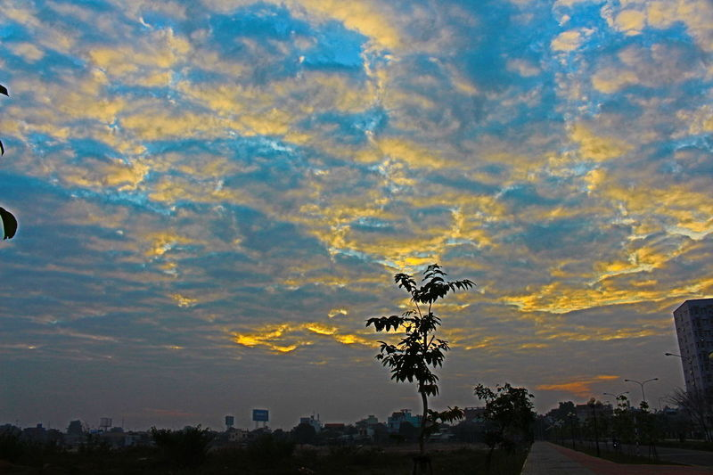Sunset Nature No People Sky Photography 700D Plant Get Up Early In The Morning Time Morning Southern Beauty In Nature