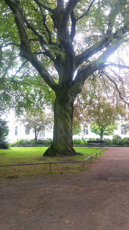 Baum Baumstamm Tree Trees Tree Trunk Germany Hamburg Altona Park Altonaer Rathaus Hamburg Altona Hamburgaltona