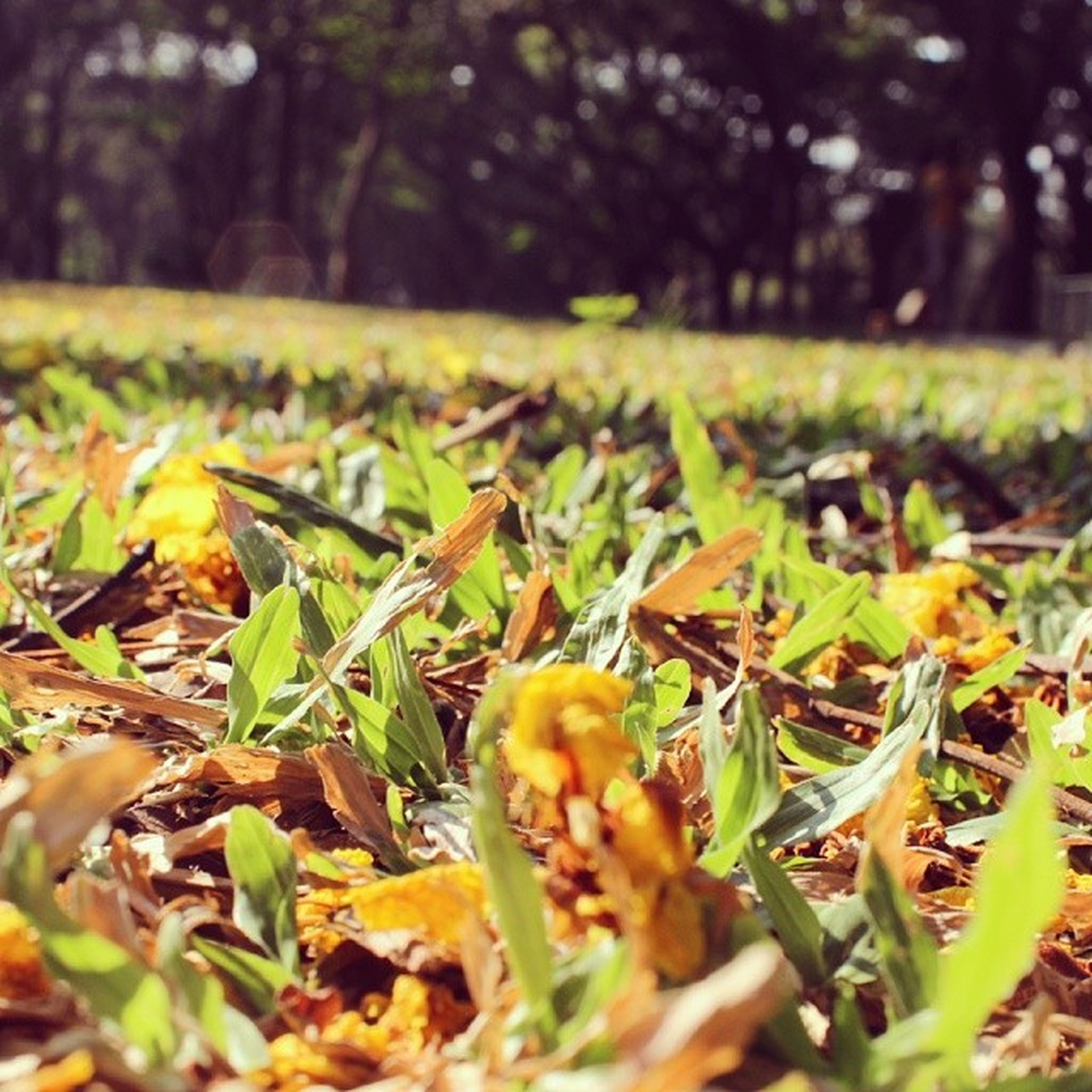 leaf, growth, selective focus, field, focus on foreground, nature, autumn, grass, green color, close-up, beauty in nature, plant, surface level, fragility, season, change, leaves, tranquility, day, yellow