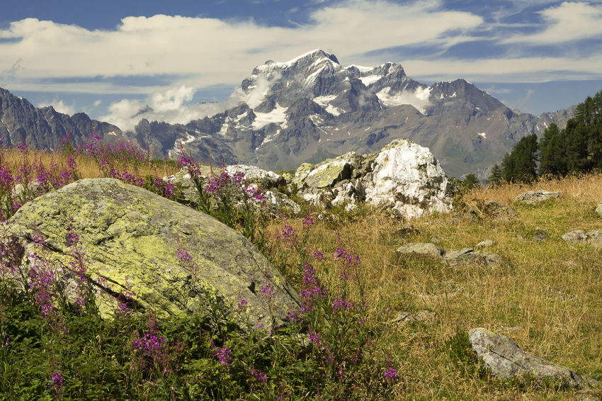 Peacks in Val d'Aosta Close-up Forest Grass Grassy Hiking Landscape Mountain Mountain Peak Mountain Range Mountain View Nature Nature Photography Nature_collection Panorama Roch Scenic Landscapes Sky Snow Summer Summer Views Tourism Travel Destinations Trekking View Wildflowers In Bloom