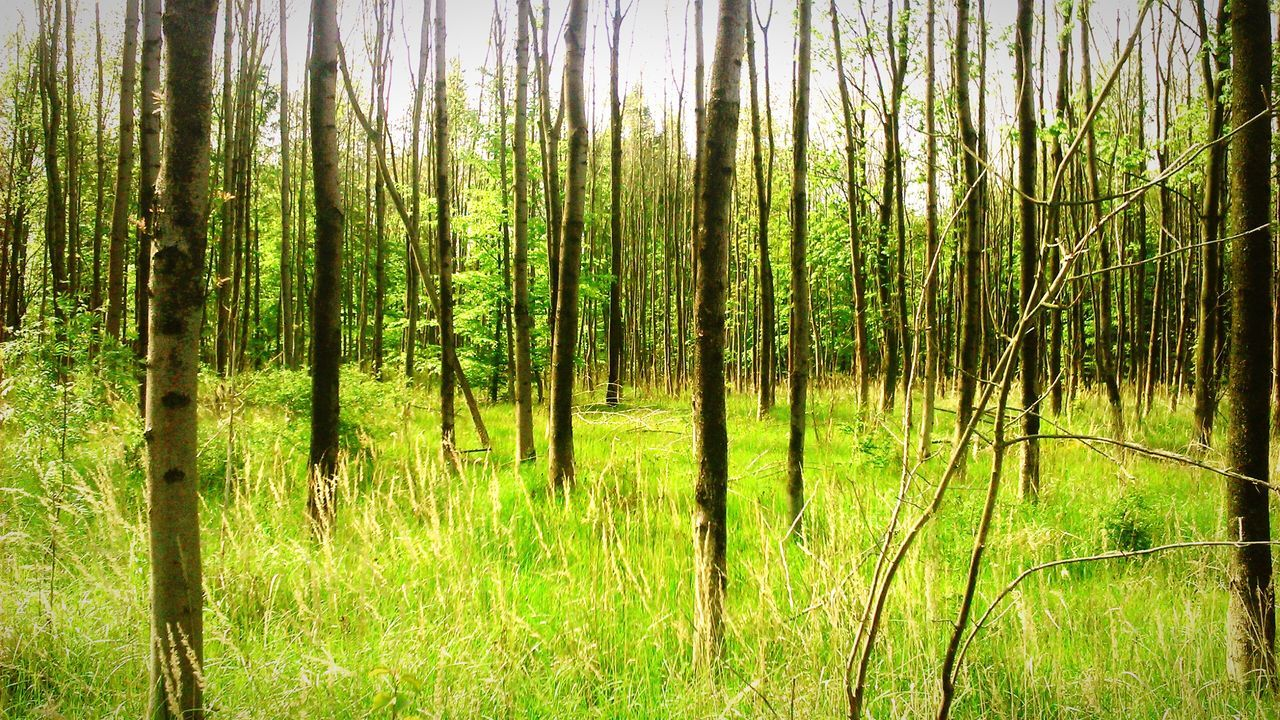 Forest Green , Trees Leaves Grass Sunny
