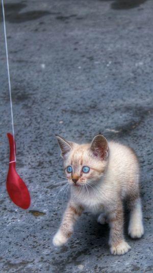 DPassos Abandoned Pet Cats Of EyeEm Procuro Um Lar 😿😿😿 Beautiful Girl