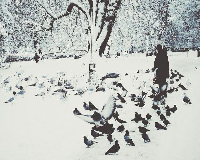 Birds EyeEm Nature Lover Snow