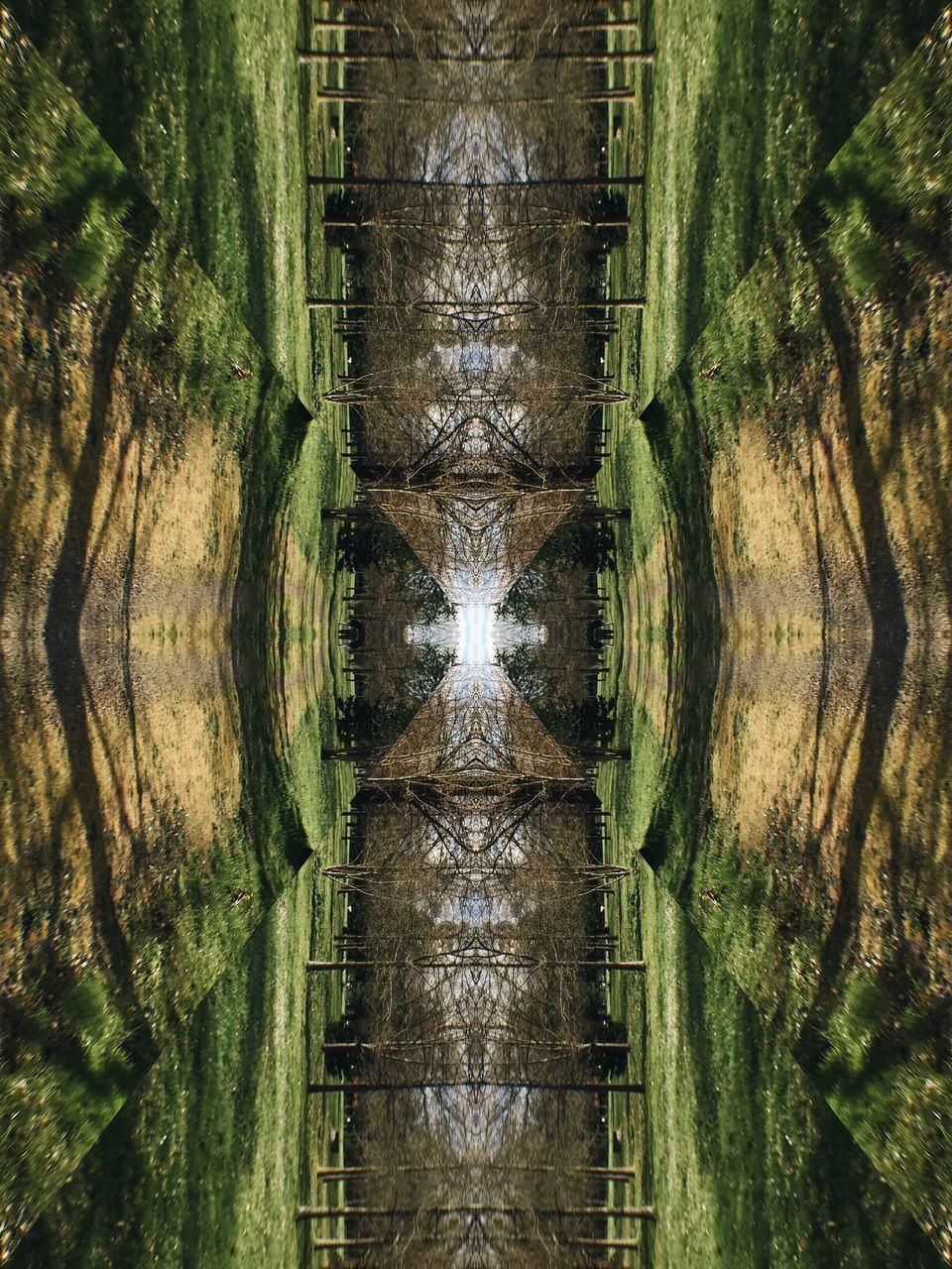 reflection, symmetry, water, no people, tree trunk, nature, tree, outdoors, day, grass