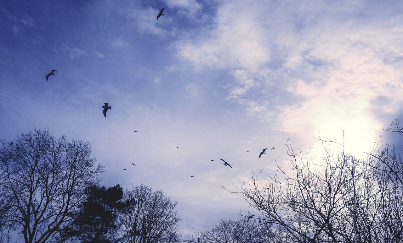 Bird Flying Animal Themes Sky Animals In The Wild Animal Wildlife Large Group Of Animals Flock Of Birds Cloud - Sky Silhouette No People Outdoors Tree Nature Day Purple Mauve  Dreamy Dream Like Tree Seagull Gull