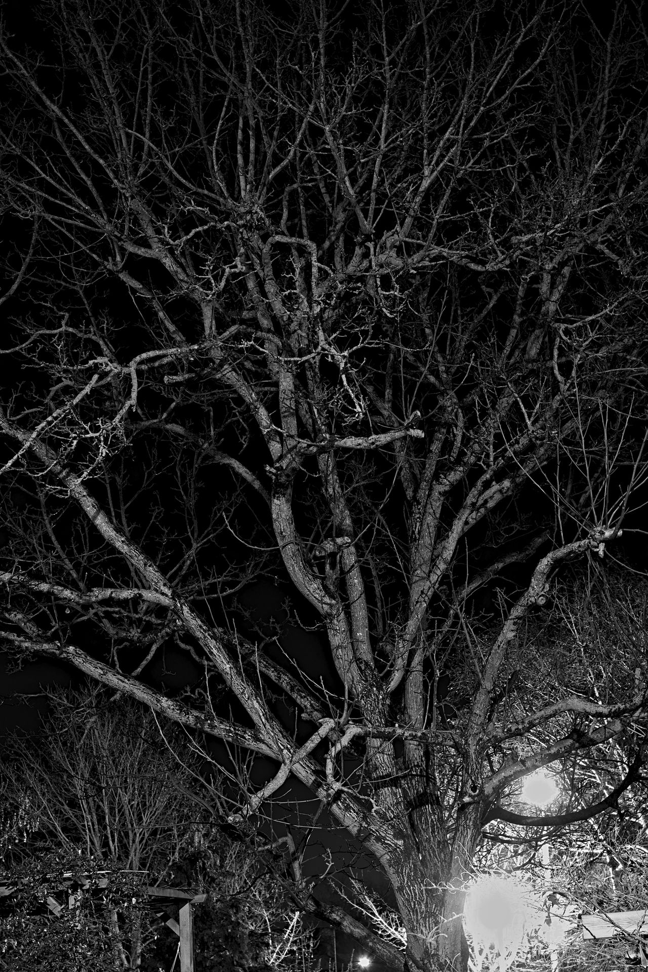 Abstract Blackandwhite Detail Light Mystery Nature Natures B&w Night Nightphotography Outdoors Tree