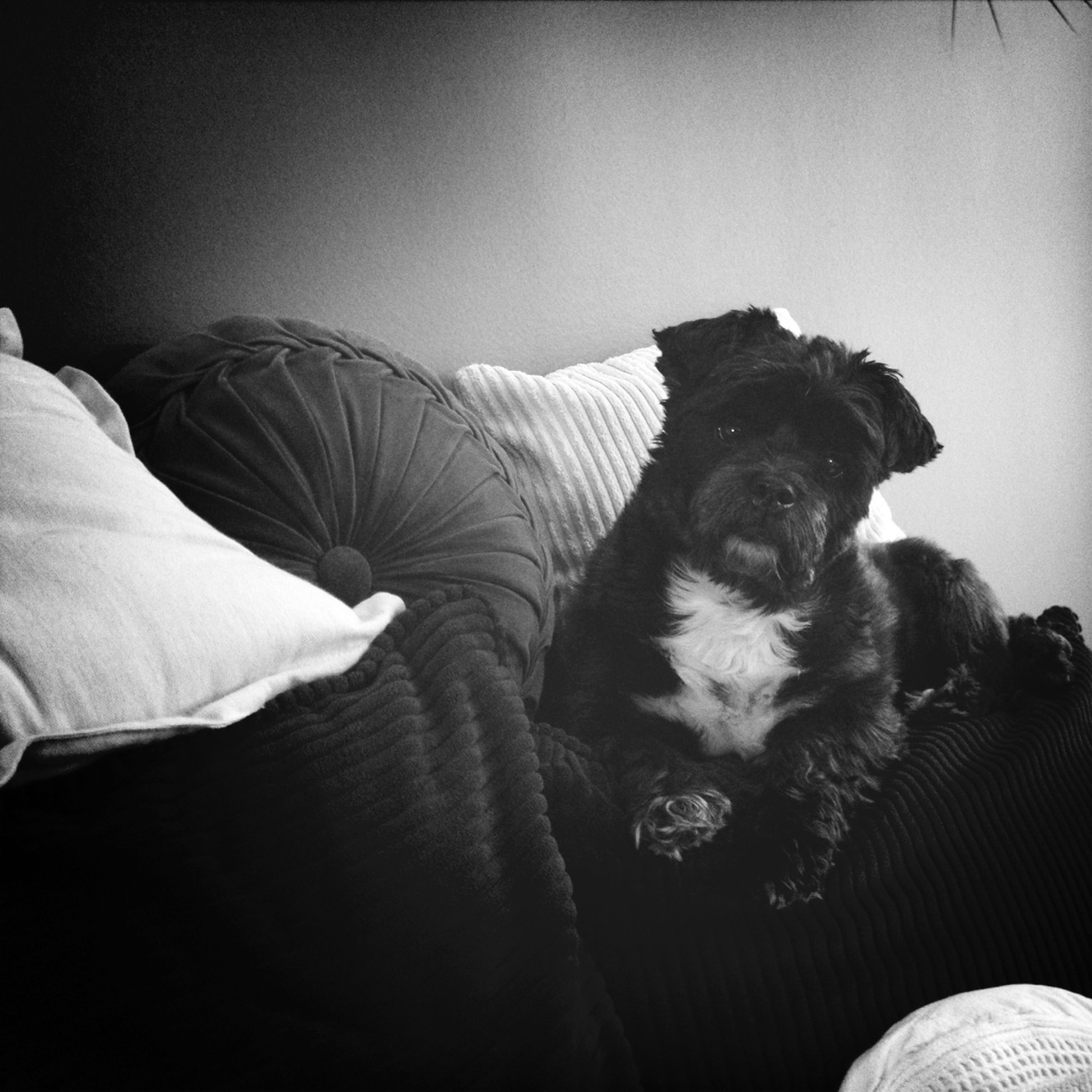 pets, domestic animals, indoors, animal themes, one animal, mammal, dog, relaxation, bed, home interior, resting, sofa, lying down, portrait, sitting, lifestyles, togetherness, looking at camera
