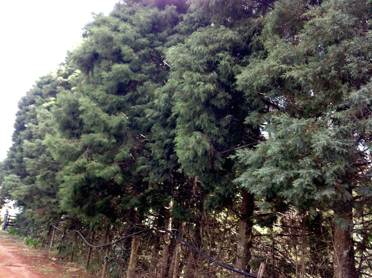 tree, growth, no people, nature, day, green color, outdoors, beauty in nature, sky, close-up