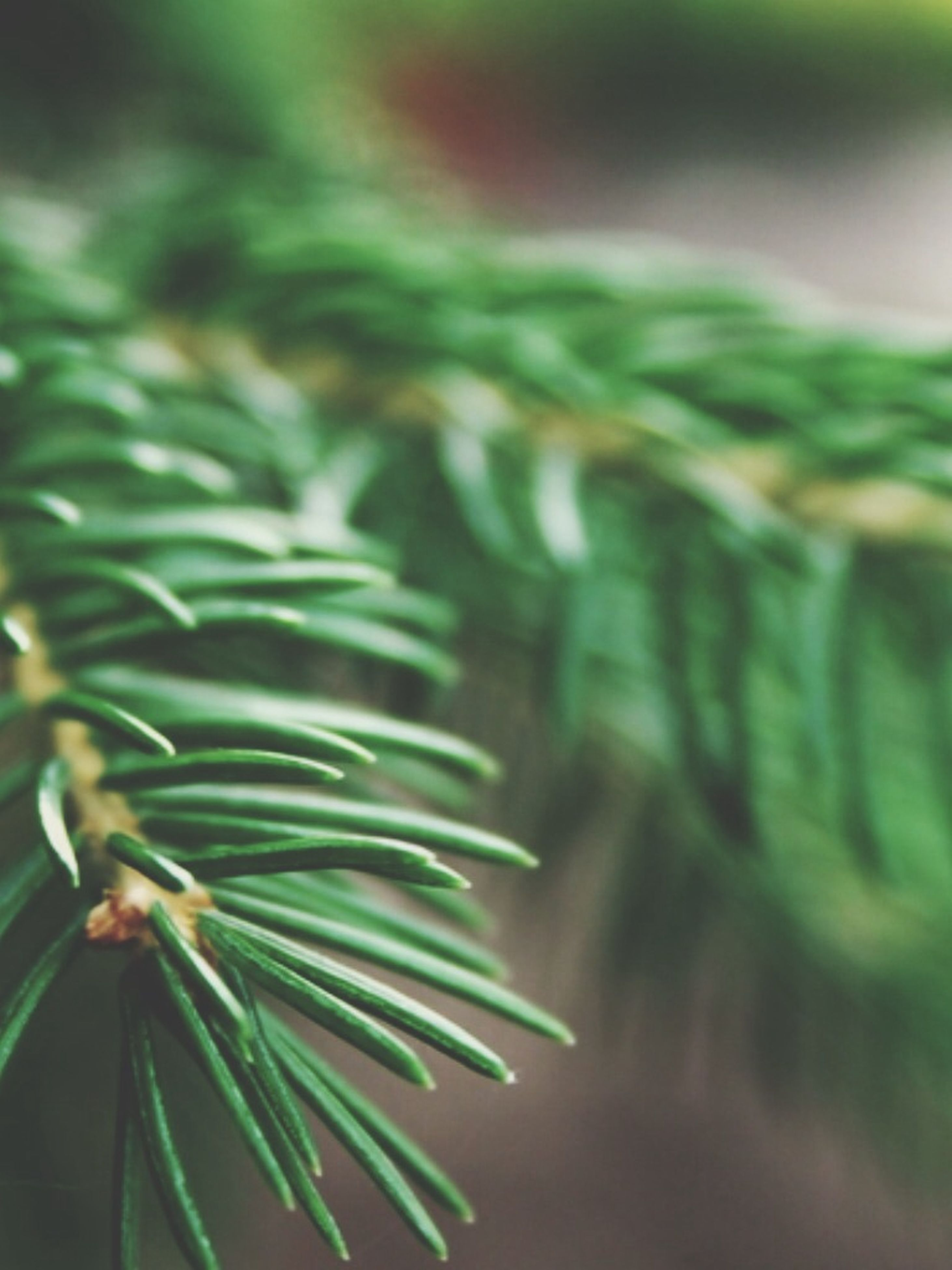 growth, green color, close-up, selective focus, plant, focus on foreground, nature, leaf, freshness, beauty in nature, green, fragility, day, no people, outdoors, natural pattern, growing, botany, macro, detail
